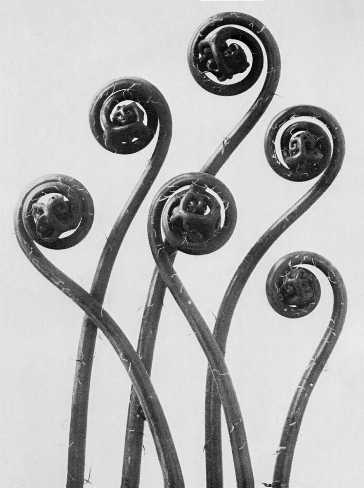 Karl Blossfeldt First Forms Of Art 1930 Zucker Art Books