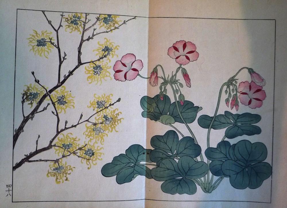 8c757e561476e Sakai Hoitsu, Suzuki Sonoichi, and Nakano Sonoaki | Shiki no hana [Flowers  of the Four Seasons] | 1908 | Zucker Art Books